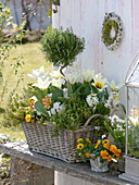 Basket with spring bloomers and herbs