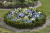 Round bed with Erysimum Rysi 'Moon', 'Star' (gold lacquer)