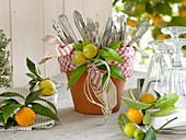 Citrus table top Citrofortunella microcarpa