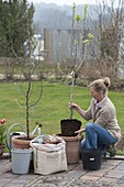 Planting and raising fruit trees in the tub