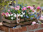 Wooden basket planted with Tulipa 'Peach Blossom', Viola cornuta