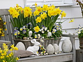 Spring basket with Narcissus 'Dutchmaster' and 'Pinza', Viola