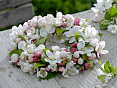 Flower wreath from Malus 'Evereste' (ornamental apple)
