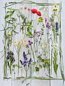 Legebild aus Frühsommer - Wiesenblumen mit Gräsern eingerahmt