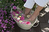 White metal tub with rose petals and lemon slices for a foot bath