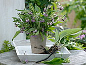 Comfrey (Symphytum officinale) in vase and rooted next to it
