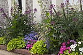 Summer flowerbed with leaf decoration and fragrant ornamental tobacco