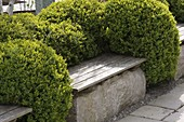 Buxus (Box) series of balls with integrated wooden benches