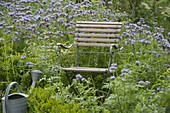 Chair in bee pasture flower meadow
