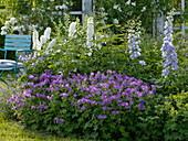Blue and white perennial border