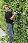 Man cutting hornbeam hedge with electric hedge trimmer