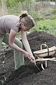 Woman harvesting asparagus, asparagus cutter, splint basket