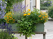 Herbs and edible flowers in green wooden box