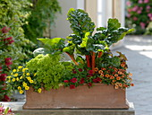 Terracottakasten mit Gemüse und Blumen