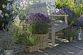 Fragrance terrace with lavender