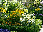 Yellow and white bed in the cottage garden