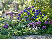 Half shade bed with hydrangeas and shadow shrubs