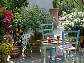 Greek Terrace Olea europaea, Bougainvillea, Citrus limon