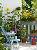 Summer flowers balcony with yellow-red seeding box