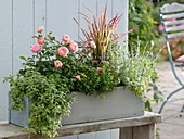Herb box with rose and grass