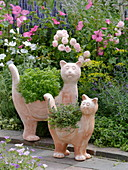 Terracotta cats planted with mini basil 'Picolino'