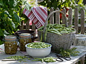 Canning beans, freshly harvested and cut fire beans