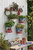 Empty tomato cans as pots for basil, thyme