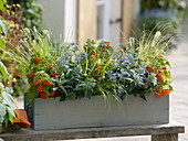 Autumn box with physalis, Caryopteris 'Blue Beard'