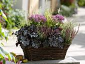 Autumnal plant basket with Heuchera 'Velvet Night'