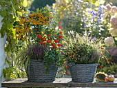 Herbstlich bepflanzte Körbe : Pyracantha 'Soleil d'Or' (Feuerdorn), Physalis