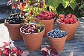 Raspberries, blackberries, currants, blueberries