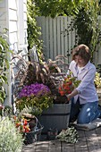 Planting wooden tubs in the autumn with grass and asters