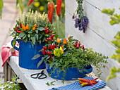 Capsicum annuum (ornamental paprika) and thyme (Thymus longifolius)