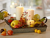 Metal tray with physalis, Rose, malus