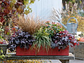 Red autumn box with Hypericum 'Magical Beauty', Heuchera