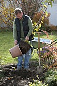 Man takes columnar apple Ballerina (Malus) out of the pot before planting