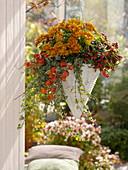 Hanging basket planted with Chrysanthemum, Gaultheria