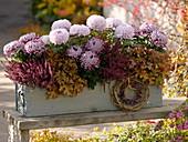 Holzkasten mit mit Chrysanthemum grandiflorum 'Malabar','Morning Light'