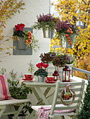 Autumnal balcony with Gaultheria, Calluna Twin Girls