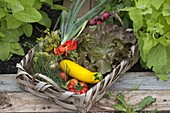 Cottage garden through the year, from the plant to the harvest