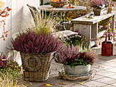 Autumnal terrace with heather