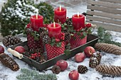 Advent wreath from single pots with red-white-dotted ribbon