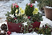 Planted box decorated for Christmas