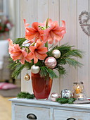 Christmas Amaryllis bouquet, Hippeastrum in salmon orange
