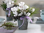 Bouquets of cyclamen, pinus, black dates