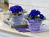 Spice up glasses as planters with ribbons