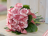 Biedermeier Bouquet of Dianthus 'Arthur' in leaves sleeves