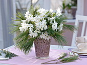 Fragrant winter bouquet of Narcissus 'Ziva', Pinus