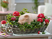 Lucky pig in the basket with oxalis deppei (lucky clover)