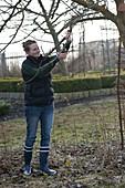 Frau schneidet Apfelbaum (Malus) im Winter zurück
